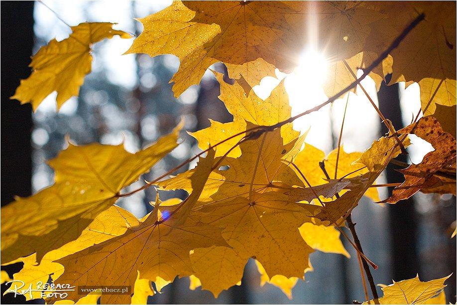 Idzie jesień … kilka ujęć z lasu